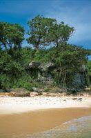 Vegetación achaparrada en el bosque seco de la península de Barú, departamento de Bolívar.