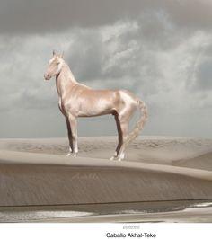 ¡O con éste! ¡Que parece de porcelana! Está increíblemente bello! Este caballo de Turquía fue anunciado como el caballo más hermoso del mundo!! ¡Como si estuviera bañado en oro! (Ya lo tengo, pero no lo quiero quitar)