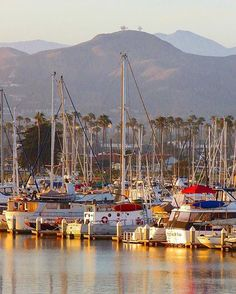 Harbor sunset, with Two Trees and our beautiful mountains as a backdrop. 📷 and caption // . Two Trees, Palm Trees, Ventura Harbor, Harbor Village, See It, San Francisco Skyline, Backdrops, Sailboats, Mountains