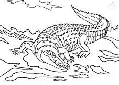 17 Beste Afbeeldingen Van Krokodil Kleurplaat Coloring Pages