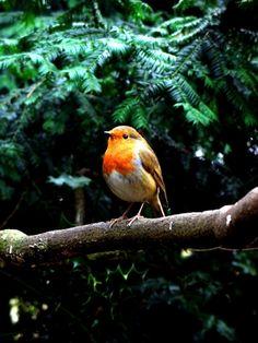 Seeing a robin makes me happy. #makesmehappy @White Stuff UK