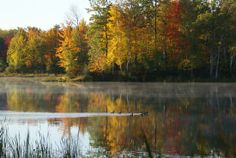 Land for Sale near Rose City, Michigan - Ogemaw County  - 294103  - 893 acres - 294103