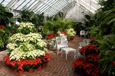 Whimsical Home & Garden The Biltmore at Christmas Poinsettia Tree, Christmas Poinsettia, Christmas Time, Merry Christmas, Biltmore Estate Christmas, Beautiful Christmas Scenes, Holiday Images, Exotic Plants, Deck The Halls