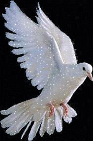 Why my precious son did you leave me, no one cares about me. Love Images With Name, Beautiful Love Pictures, Beautiful Gif, Beautiful Roses, Dove Pictures, Jesus Pictures, Bird Pictures, Dove Bird, Bird Gif