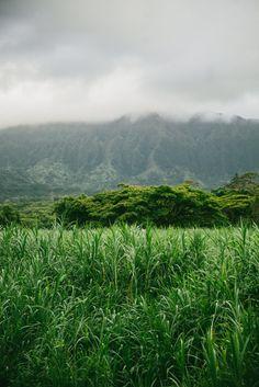 Layers of Green Oahu Hawaii [OC] [2736 X 4096]