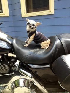 DOGGLES = READY TO RIDE