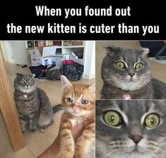 Funny Animal Pictures - 14 Images