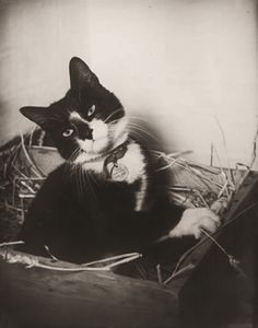 Simon was the ship's cat who served on the Royal Navy sloop HMS Amethyst. In 1949, during the Yangtze Incident, he received the PDSA's Dickin Medal after surviving injuries from a cannon shell, raising morale, and killing off a rat infestation during his service.