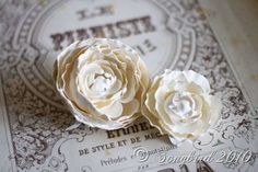 Dipping roses in plaster (can use silk or real flowers) - interested in this technique and using it on other things as well - from SongBirdBlog - #plaster #crafts #flowers - tå√