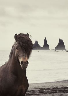 2 of my faves ~ Horses & the Ocean!