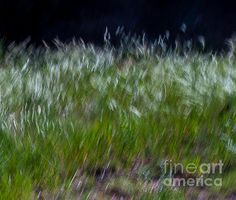 How fun to see all the movement and the sparks of white in this 'Swirling Grass' capture by Steven Reed  #abstractphotography #greenliving