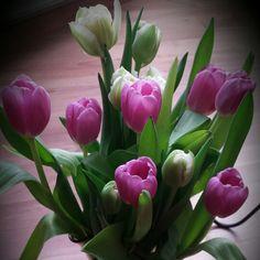 Nőnapi virág magamnak - elvárások, nyomás vagy sérelmek nélkül. Adj meg mindent magadnak, amire vágysz a szíved mélyén, hogy aztán a Világ is tudja, hogy mi a folytatás... ;) #szeppillanatok