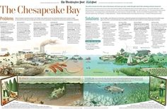 Help save the bay, and get cool stuff for free from KidsPost text and illustration by Patterson Clark Save The Bay, Stuff For Free, Environmental Education, Outdoor Learning, Problem And Solution, Chesapeake Bay, The Washington Post, Earth Science, Wildlife