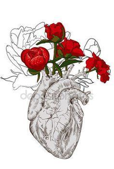 imagens coração humano - Pesquisa Google
