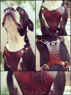Image of Custom Leather Hand Tooled Dog Harness Exsect Leather Co.
