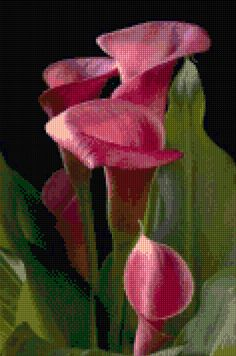 Calla Lilies Cross Stitch pattern PDF - Instant Download! by PenumbraCharts on Etsy