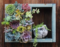 Mini Shelf Vertical planter Succulent garden 12 x