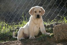 Cute puppy and dog - http://www.1pic4u.com/videos/hunde-babys/suesse-hundebabys-358/