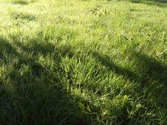 Grass MM