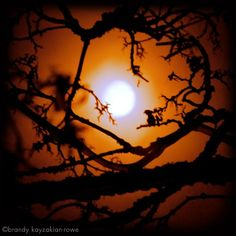 Halloween Harvest Moon Cradle - and the trees watch the orange moon just as we do - Archival Fine Art Photograph -8x8 square, 8x10 or 8.5x11