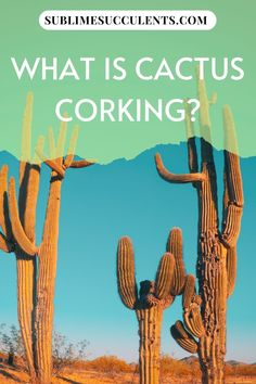 Wondering what is cactus corking? If you're new to the wonderful world of cacti, it can be alarming when parts of your beloved plants begin to turn brown. Is it a disease? Fungus? Curable or deadly? If the brown areas are limited to the base of the plant, you may be looking at corking. Some gardeners find corking to be quite unattractive, but it's actually just a normal part of the aging process for cacti. Check this pin for more details! #cactus #gardening #corking Cacti And Succulents, Cactus Plants, The More You Know, How To Find Out, Cactus Care, Succulent Care, Aging Process, Types Of Plants, Houseplants