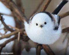 網友在住家附近散步時,突然飛來超可愛小鳥來搭訕,結果回家一查,才知道牠有多特別! - iPetGroup愛寵物