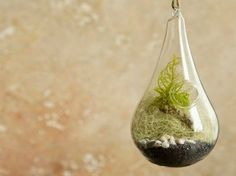 Hanging Plant Terrarium with Feather Moss