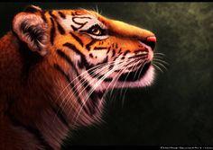 Tiger by https://felondog.deviantart.com on @DeviantArt