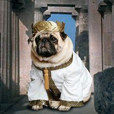 I'm seeing Fluff's next Halloween costume now... Caesar Aufluffstus :)