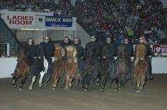 Icelandig horses