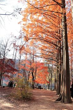 Autumn in Nami