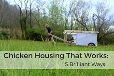 Chicken Housing That Works-2