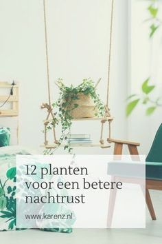 Garden Plants, Indoor Plants, House Plants, Indoor Outdoor, Student Room, Small Plants, Fauna, Inspired Homes, Home And Living