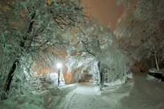 Snow covered path winter - / - - Your Local 14 day Weather FREE > www. No Ads or Apps or Hidden Costs Winter Szenen, I Love Winter, Winter Magic, Winter Night, Snow Night, Winter Road, Snow Days, Cold Night, Winter White
