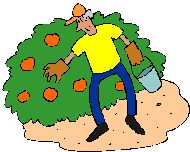 Where in Utah to find pick your own farms and orchards for fruit, vegetables, pumpkins and canning & freezing instructions!