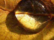 goutte d'eau sur les feuilles séchées