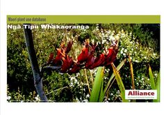 Mary O'Neill Alliance Party Candidate for Napier Electorate - NZ Parliamentary Election Maori Plant Use Database - Nga Tipu Whakaoranga Election 2014, Flowers, Plants, Maori, Floral, Plant, Royal Icing Flowers, Florals