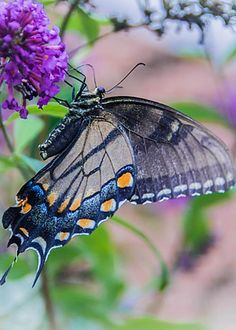 Butterfly by Linda Eszenyi
