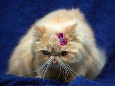 Persian cats...love it:)