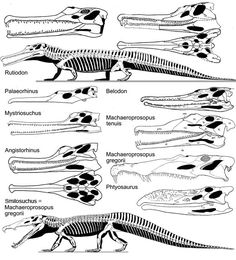 Triassic Phytosaurs