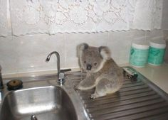 unusual water thief))