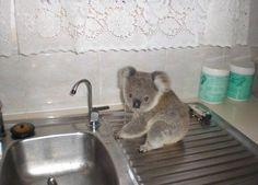 unusual water thief))
