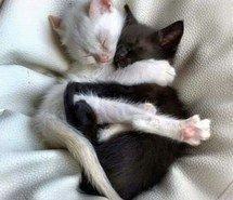 abbraccio-animals-bianco-bianco-e-nero-Favim.com-3460634.jpg