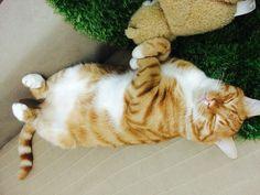 #cat #sleepycat #relax #relaxing #sleepy