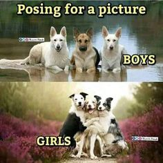 Pets are people, too 😀 Cute Animal Memes, Funny Animal Videos, Animal Quotes, Cute Funny Animals, Funny Animal Pictures, Funny Photos, Animal Humor, Dog Pictures, Funny School Jokes
