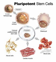 We use the most optimal stem cells for each patient.  Usually we strive for pluri-potential cells because these stem cells can differentiate into whatever your body needs.  Learn More: http://www.stemcell.life/stem-cell-therapy.html