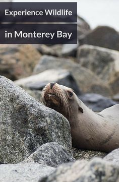 This tour takes you to Moss Landing and Monterey Bay California to see marine life