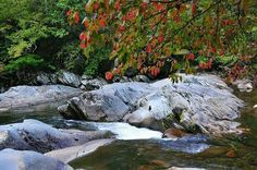 Autumn begins as dogwood leaves turn red in the Tennessee mountains