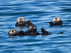 Hi, humans! Come float with us! - August 5, 2015