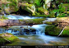 Roaring Run Waterfall with Moss Covered Log Picture